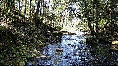 Nómadas - Tasmania, el paraíso del diablo - Escuchar ahora