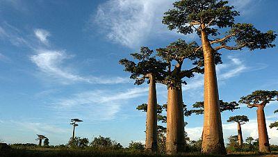 Nómadas - Madagascar, universo azul - 10/11/13 - escuchar ahora