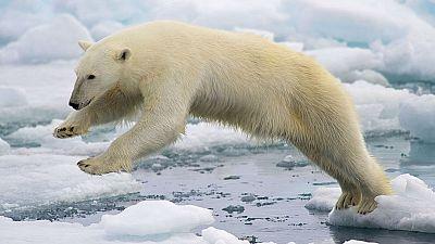 N�madas - El Polo Norte, ansiado horror - 23/11/14 - escuchar ahora