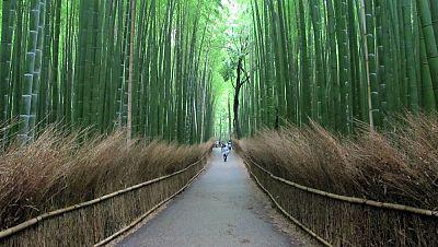 N�madas - Kioto, florida capital cultural - 19/04/15 - escuchar ahora