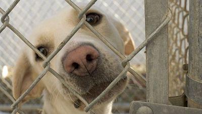 Fauna cercana - Voluntariado en una protectora de animales - Escuchar ahora
