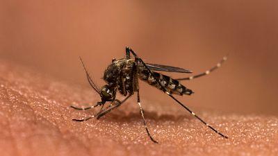 Esto me suena. Las tardes del Ciudadano García - Luz verde a la vacuna contra la malaria - Escuchar ahora