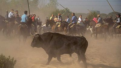 Radio 5 Actualidad - Rueda de emisoras: Tordesillas celebra su polémico Toro de la Vega - Escuchar ahora