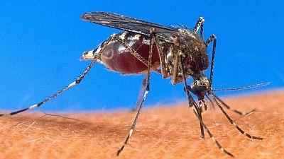 Entre paréntesis - Bajan los casos de malaria un 60% desde el año 2000 - Escuchar ahora