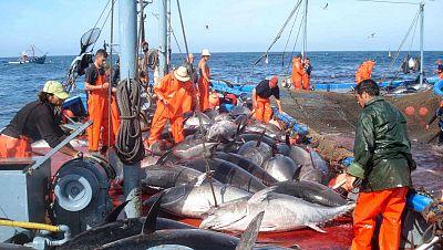 Agro-5 - El sector pesquero quiere crecer tras la crisis - 3/10/15 - Escuchar ahora