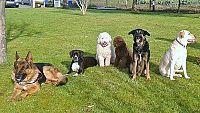 En la calle, alguien -  Personas sin hogar educando a perros sin hogar - 05/11/15 - Escuchar ahora
