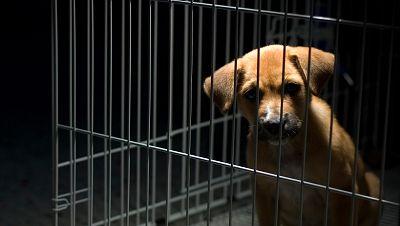 España vuelta y vuelta - Lucha contra el maltrato animal - Escuchar ahora