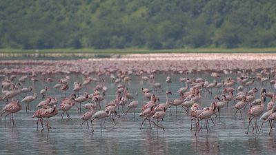 Animales y medio ambiente - El lago Nakuru - 28/11/15 - Escuchar ahora