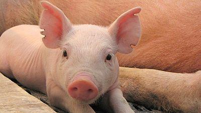 Agro 5 - Internacionalizaci�n, c�digo de buenas pr�cticas y los problemas del porcino - 9/01/16 - Escuchar ahora