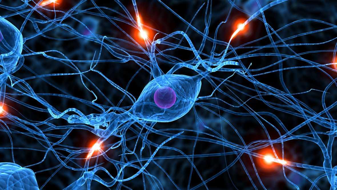 Marca España - Neurociencia social, el estudio de los comportamientos de una especie - 11/01/16 - escuchar ahora