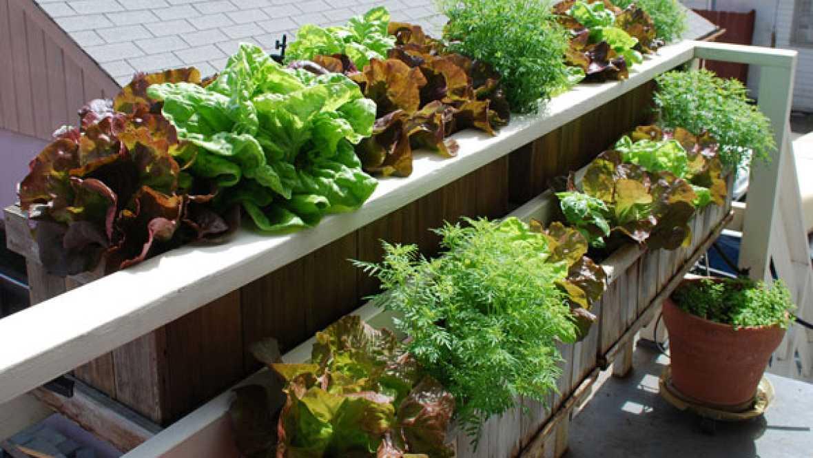 Vida verde - Cultivando en la ventana - 14/01/16 - Escuchar ahora