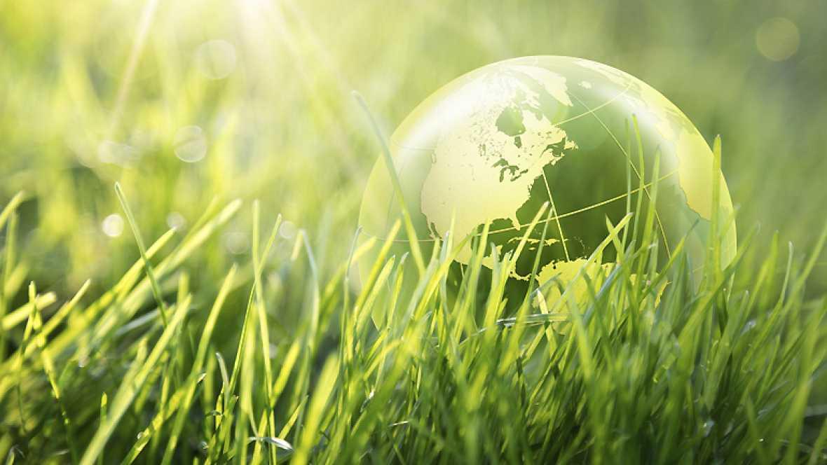 Entre paréntesis - Día Mundial de la Educación Ambiental - Escuchar ahora