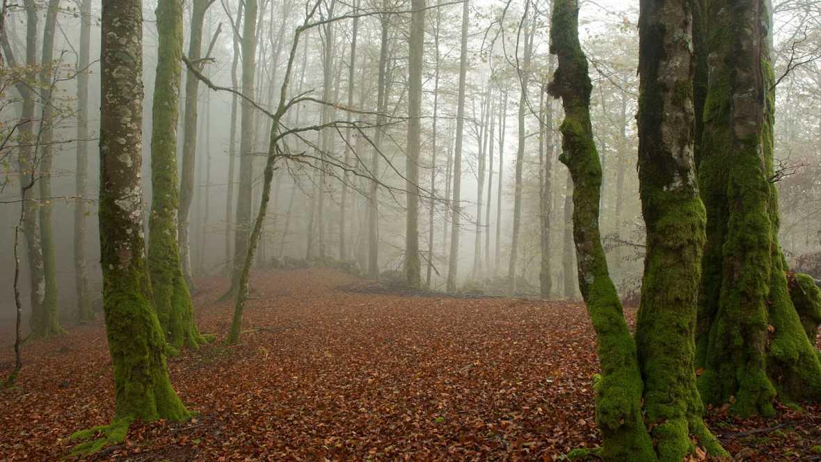 Caminantes - Bosque de Leurtza - 31/01/16 - Escuchar ahora