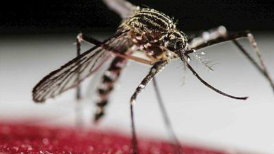 Entre par�ntesis - Zika, una emergencia de salud p�blica internacional - Escuchar ahora