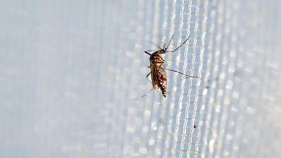 Mundo solidario - El trabajo de Unicef contra la propagaci�n del zika - 07/02/16 - escuchar ahora