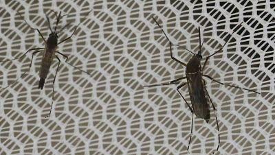 Salimos por el mundo - Ante el zika, acelerar la producci�n de vacunas y m�s investigaci�n - 11/02/16 - escuchar ahora