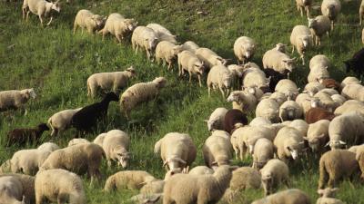 España vuelta y vuelta - Nuevas escuelas de pastores - Escuchar ahora