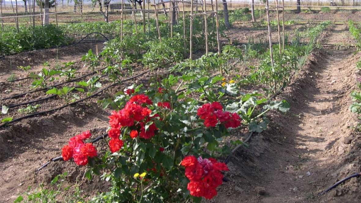 Vida verde - Propuestas 'eco' para la primavera - 31/03/16 - escuchar ahora