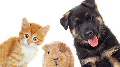 Entre par�ntesis - Los animales de compa��a y sus m�ltiples beneficios - Escuchar ahora