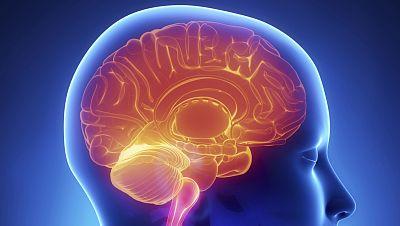 Marca España - El tamaño del cerebro si importa... para la supervivencia de las especies - 23/05/16 - escuchar ahora