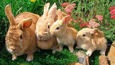 Agro 5 - Conejos sin salida - 11/6/16 - Escuchar ahora