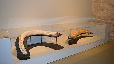 Entre paréntesis - El Museo de Ciencias Naturales de la Universidad de Zaragoza muestra la evolución del mundo en los últimos 13 millones de años - Escuchar ahora