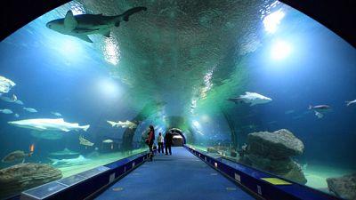 Espa�oles en la mar - El mayor acuario de Europa - escuchar ahoa