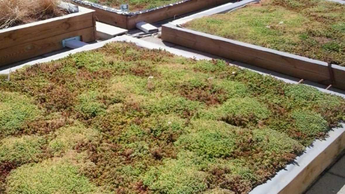 Vida verda - Com afecta el TTip a l'Agricultura