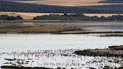 Entre paréntesis - Doñana, una joya natural insustituible - Escuchar ahora