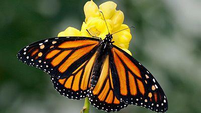 Entre par�ntesis - Qu� son los oasis de mariposas - Escuchar ahora