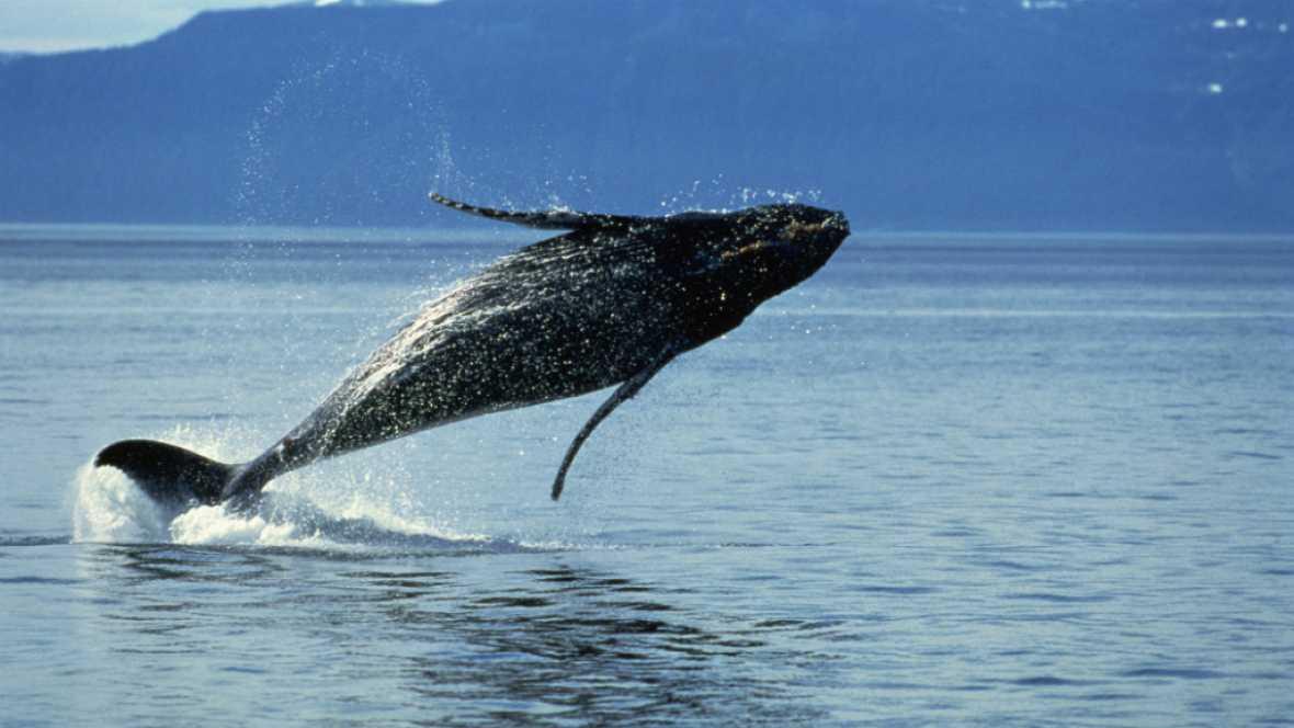 Los mares relatados - Las ballenas tambi�n eran s�mbolos - Escuchar ahora