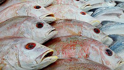 España vuelta y vuelta - Una 'app' para identificar el pescado de temporada - Escuchar ahora