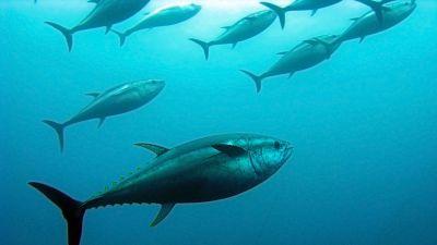 Espa�oles en la mar en Radio 5 - Mercado de atunes - 25/08/16 - Escuchar ahora