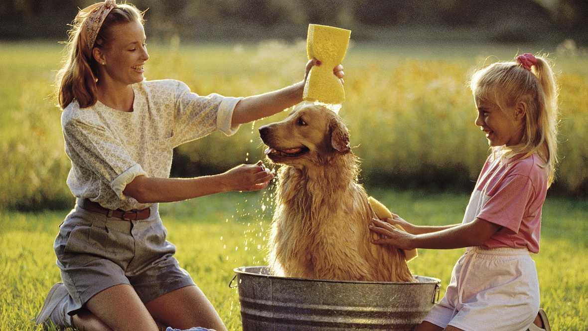 Fauna cercana - Bañar a un perro con piel sensible - 15/09/16 - Escuchar ahora