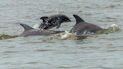 Españoles en la mar - III campaña de estudio del delfín común en aguas de la Bahía de Algeciras - 22/09/16 - escuchar ahora