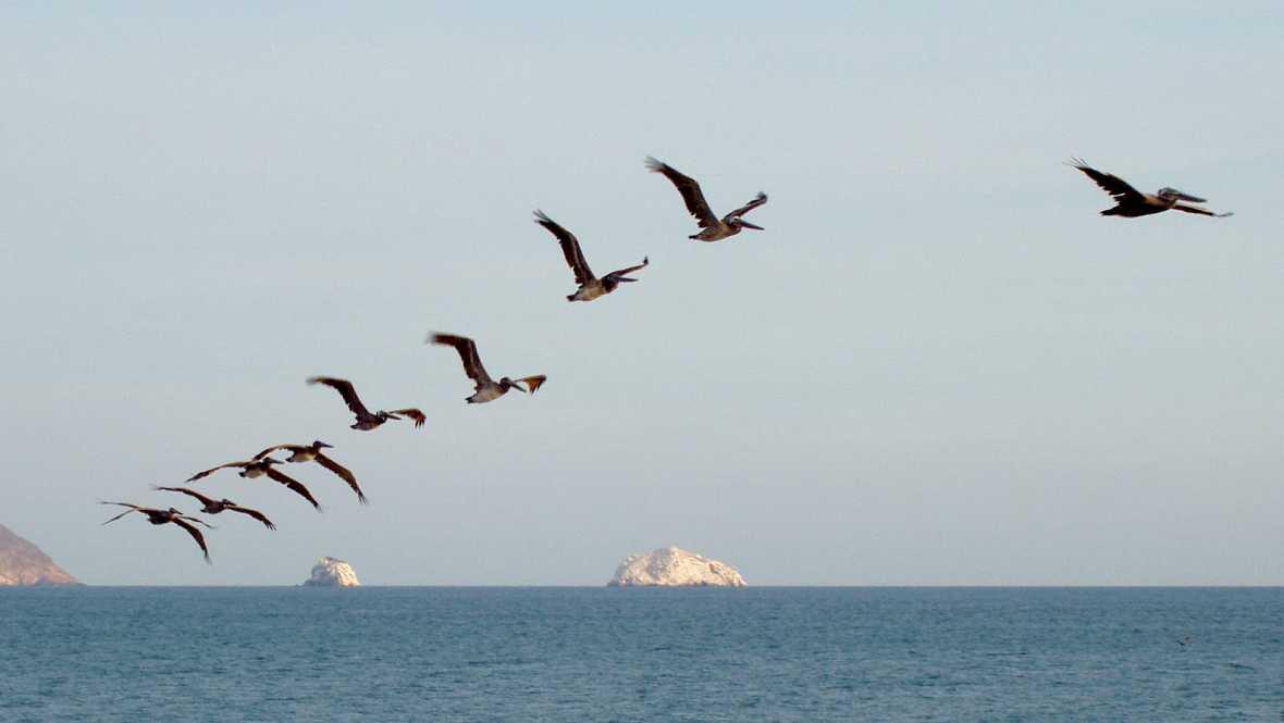 Animales y medio ambiente - El viaje de las aves - 25/09/16 - Escuchar ahora