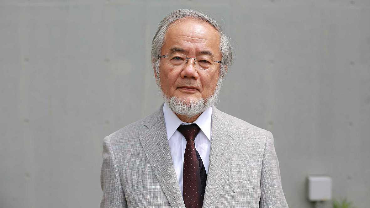 Boletines RNE - El japonés Yoshinori Ohsumi obtiene el Premio Nobel de Medicina 2016 - 03/10/16 - Escuchar ahora