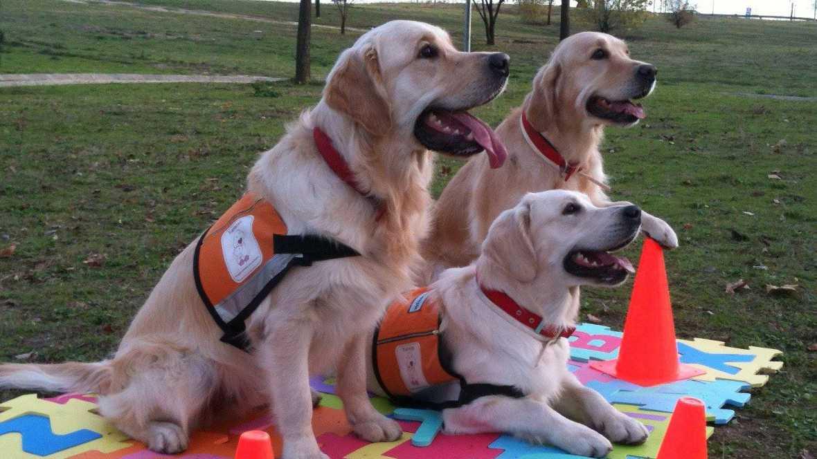 Fauna cercana - Terapias con perros en los colegios - 11/10/16 - Escuchar ahora