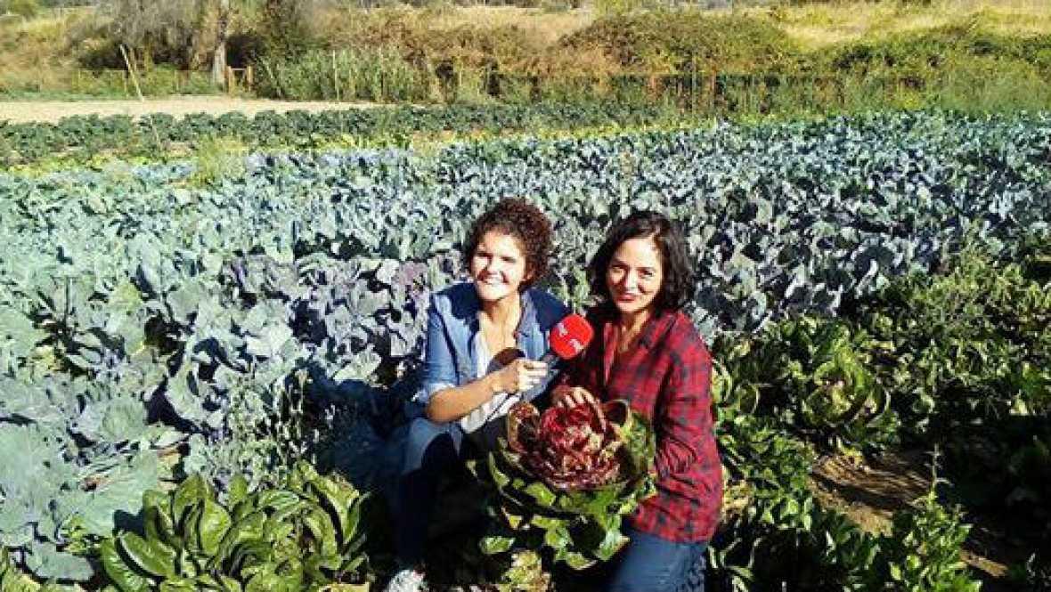 Tolerancia Cero - Día Internacional de las Mujeres Rurales - 13/10/16 - Escuchar ahora