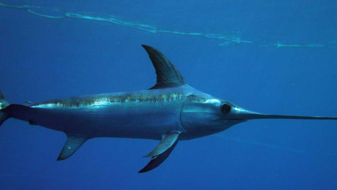 Agro 5 - El sector pesquero ante los TAC's para 2017 y el futuro del pez espada - 15/10/16 - Escuchar ahora