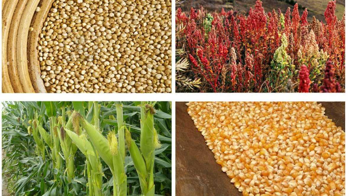 Agro 5 - La situación mundial de la agricultura según la FAO - 22/10/16 - Escuchar ahora