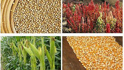 Agro 5 - La situaci�n mundial de la agricultura seg�n la FAO - 22/10/16 - Escuchar ahora