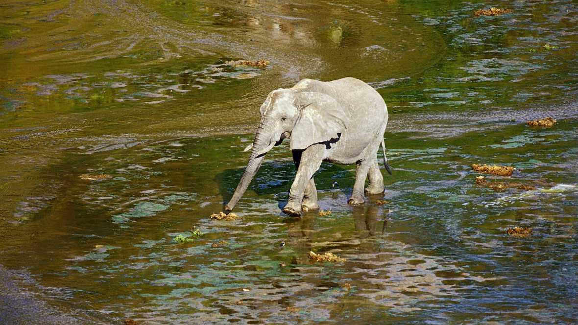 Piel adentro - El elefante blanco - 22/10/16 - Escuchar ahora