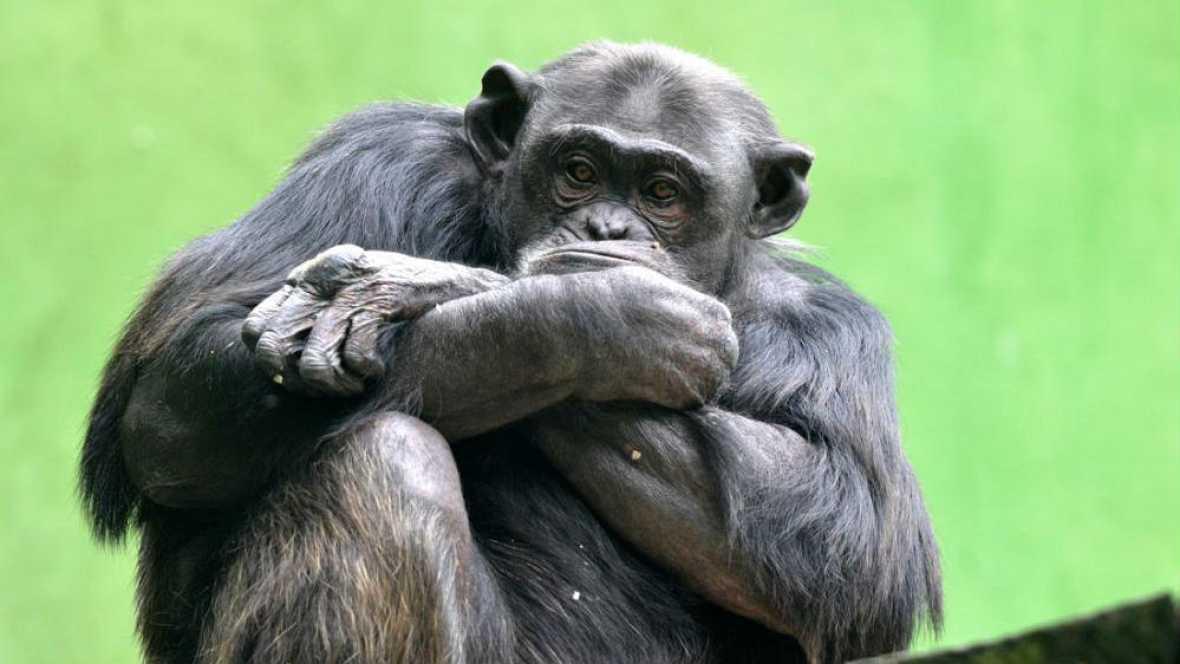Animales y medio ambiente - Hubertus - 23/10/16 - Escuchar ahora