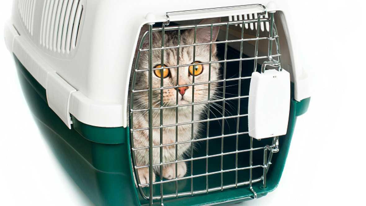 Fauna cercana - Divorcio. ¿Quién se queda con el gato? - 27/10/16 - Escuchar ahora