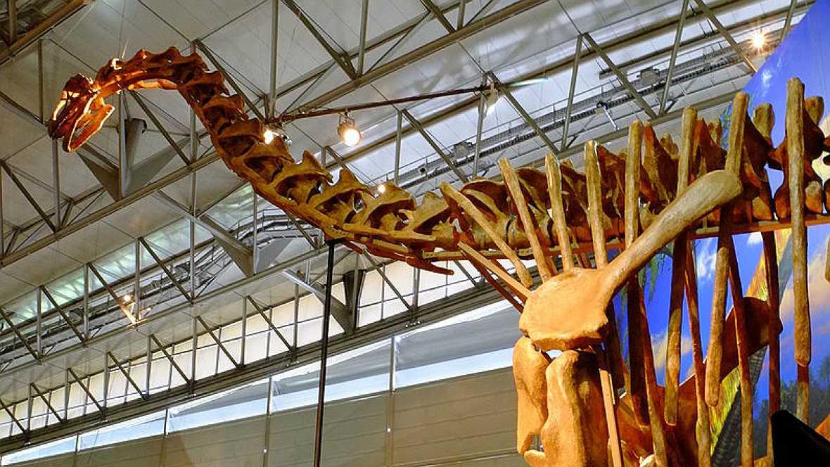 Lógica paleontológica - 'Turiasaurus riodevensis' - 28/10/16 - Escuchar ahora