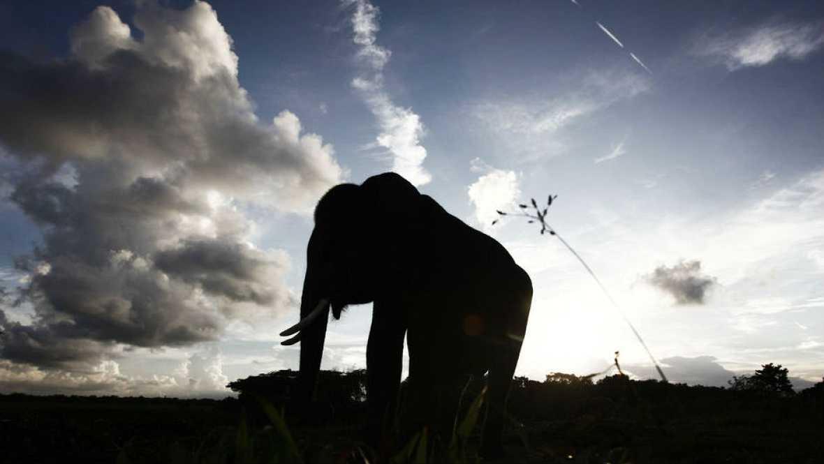 Piel adentro - El elefante y la estaca - 30/10/16 - Escuchar ahora