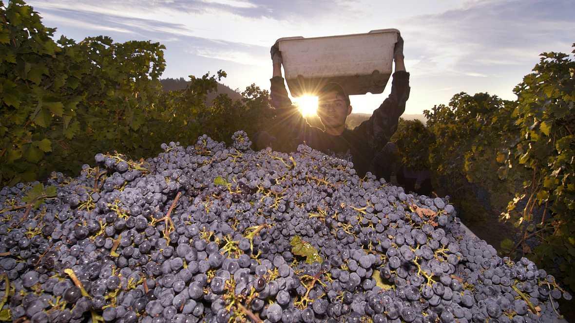 Reportajes Emisoras - La Rioja, temporeros - 31/10/16 - Escuchar ahora