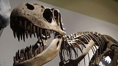 A hombros de gigantes - El Museo Nacional de Ciencias Naturales celebra su 240 cumpleaños - 14/11/16 - Escuchar ahora