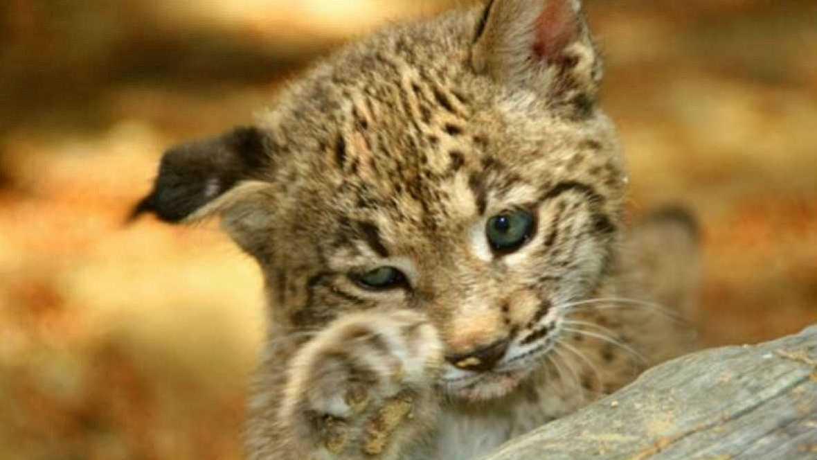 Animales y medio ambiente - Reproducción en cautividad - 04/12/16 - Escuchar ahora